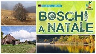 boschinatale_sito